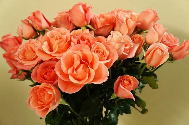 voňavé růže