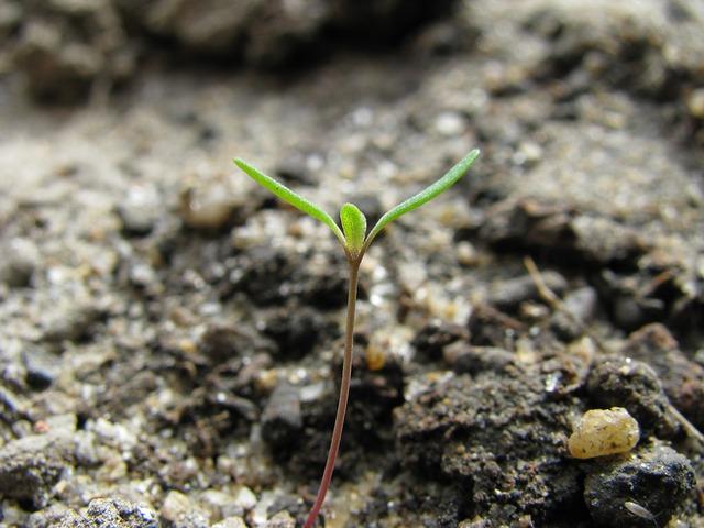 Začněte klíčit semena post thumbnail image